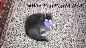 Tostos Kedi Oyuncağı ile