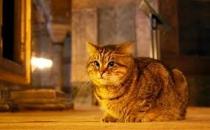 Gli yaşamını yitirdi,meşhur kedi